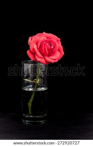 Damask Rose Beautiful Pink Flower In Glass On Black Velvet Texture Floral Background
