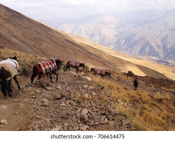 DAMAVAND MOUNTAIN, IRAN - October, 2016: DAMAVAND mountain - the highest peak of Iran, man going up, leading a caravan of horses at the altitude of 4000 m, Iran on October, 2016