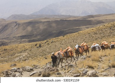 DAMAVAND MOUNTAIN, IRAN - October 4, 2016: DAMAVAND mountain -the highest peak of Iran, man going up, leading a caravan of horses at the altitude of 4000 m, Iran on October 4, 2016