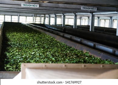DAMBETHANNA, SRI LANKA-MARCH 23: Tea factory indoor around on March 23, 2013 in Dambethanna, Sri Lanka. Tea in Sri Lanka counts for 12 percent of the GDP, generating roughly 700 million USD annually.