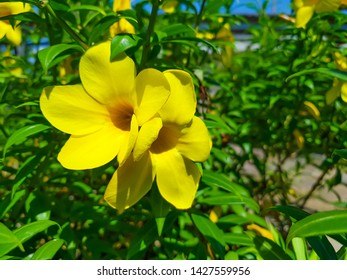 Damiana leafs with The Herb That Helps Reduce Anxiety.