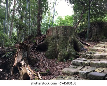 Damion-Zaka slope. Route and path of pilgrimage of Kumano kodo. Japan