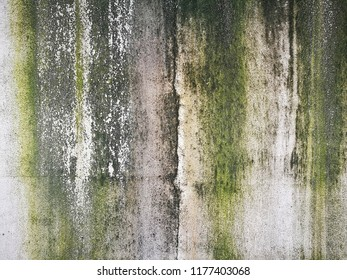 damp cement texture, moss wall background, abstract dirty concrete surface detail