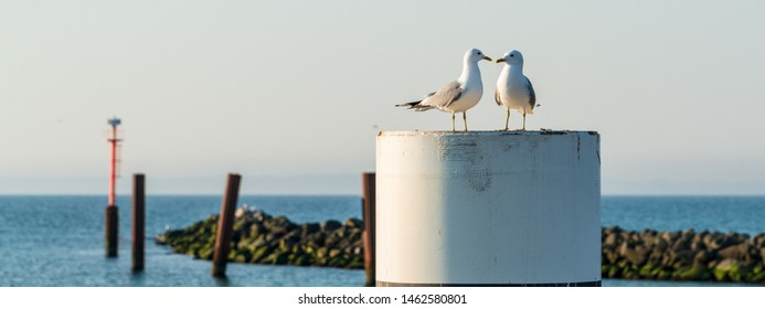 Damp, Schleswig-Holstein - A pair of gulls sitting on a bollard in the harbour of the Baltic Sea resort of Damp