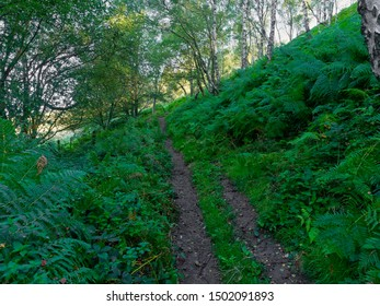 A damp woodland path crosses a steep hillside with bracken and Silver Birch trees groing on both sides