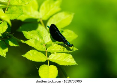 A damsel fly in Shoemaker State Nature Preserve, near Peebles, Ohio.