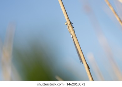 Damselfly in the field,new life in close up