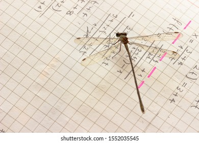 Damselfly rests on a math note