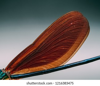 Damselfly wings, damselflies are insects of the suborder Zygoptera in the order Odonata