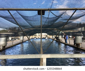 DAN, ISRAEL - NOVEMBER 27, 2018: Ponds for growing trout in kibbutz Dan in northern Israel