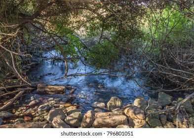 Dan River in Dan Nature Reserve, largest  tributary of Jordan River, emerges from Tel Dan & is fed by rains  & snow melt from Mount Hermon, located in Upper Galilee, on northern border of Israel
