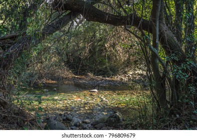 Dan Springs, wading ponds & calmly babbling brooks of shallow refreshing water, charming and shady corners in Tel Dan Nature Reserve, located in Upper Galilee on Israel's northern border, Israel