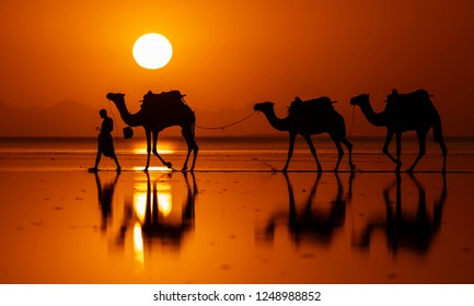 DANAKIL DEPRESSION, ETHIOPIA-NOVEMBER 15, 2018: Many decades Caravan of camels transporting salt at sunrise