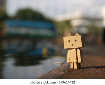 danbo cat By the pool