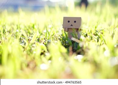 Danbo. A cute danbo board on green grass during sunny day.