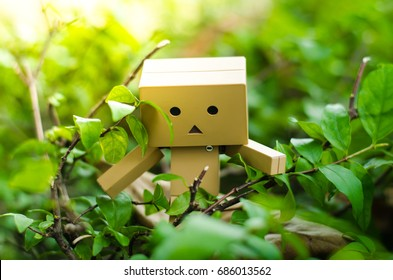 Danbo. A cute danbo board on green grass during sunny day.