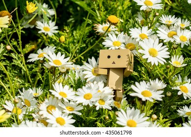 Danbo Doll on flowers