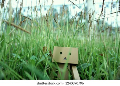Danbo exploring  in the grass