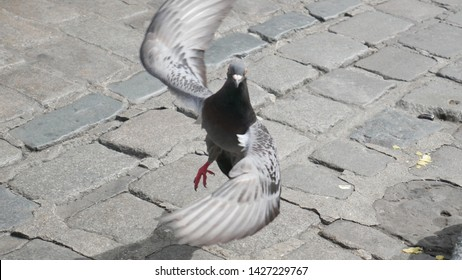 The dancing bird photo. This pigeon was chowing down on chips that someone dropped on the stone-paved street. As got too close, this pigeon took off. This shot was in the midst of lift-off.