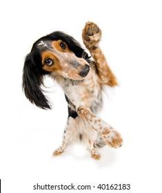 Dancing dog!