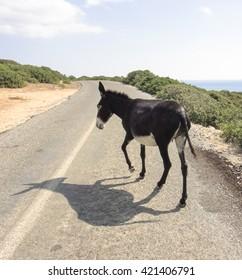 Dancing donkey. Northern Cyprus