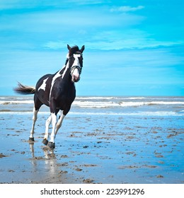 Dancing Horse on the North Sea Coast in Zealand, Netherlands