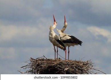 Dancing on the nest