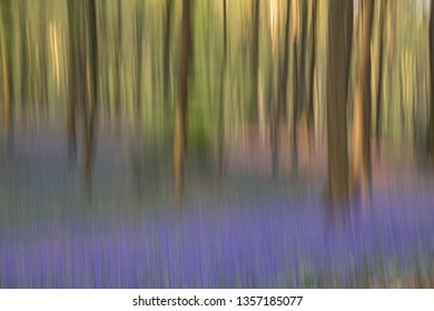 dancing trees with bluebells flowers