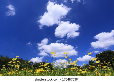 Dancing yellow flower field with rising clouds