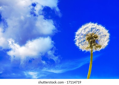 Dandelion against the backdrop of the sky
