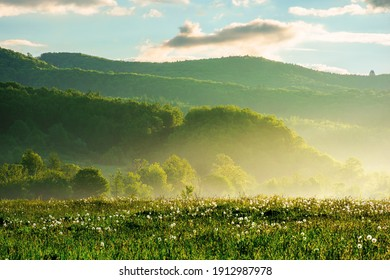 dandelion field in rural landscape at sunrise. beautiful nature scenery with blooming weeds in morning light. clouds on the sky above the distant mountain - Shutterstock ID 1912987978