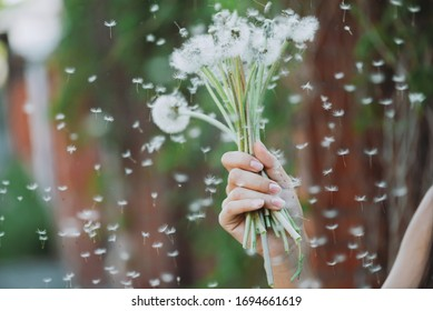 Dandelion flower in girl hand close-up. Blowball seeds fly in wind on green red background. Beautiful female hand holds dandelion. White flowers bouquet in outstretched woman arm in spring time.