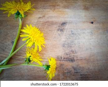 dandelion flower on wooden background frame