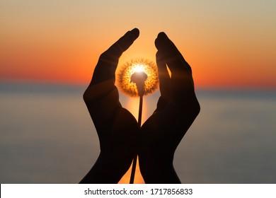 fleur de pissenlit dans les mains d'une jeune femme au coucher du soleil ou au lever du soleil, paysage d'eau de mer, spirituel, méditation, âme, concept d'harmonie