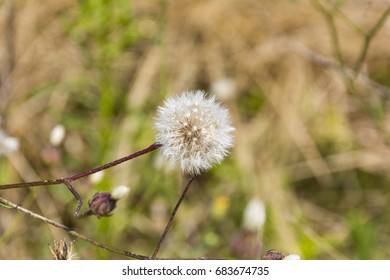 dandelion flowers on fields day light close up composition