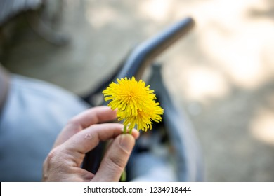 Dandelion in a Hand holding