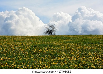 Dandelion meadow with tree and clouds