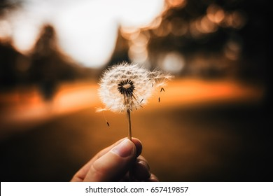 Dandelion in my Hand