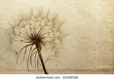 Dandelion in the old retro background