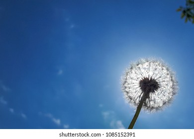 dandelion on a background of blue sky obscuring the sun