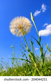dandelion on summer meadow against blue sky background