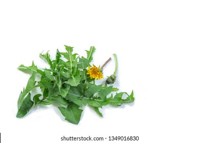 Dandelion pnant and flower on white background