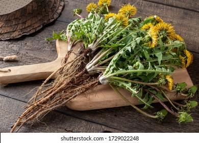Kronenwurzeln mit Blättern auf dem Tisch