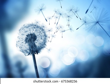 Dandelion seeds blowing in the wind across a cool field background, conceptual image meaning change, growth, movement and direction.