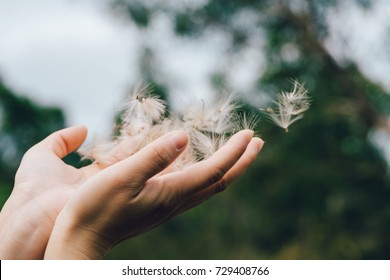 Dandelion seeds in the hands of the wind blowing