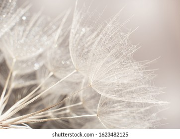dandelion at sunset . Freedom to Wish. Dandelion silhouette fluffy flower on sunset sky. Seed macro closeup. Soft focus. Goodbye Summer