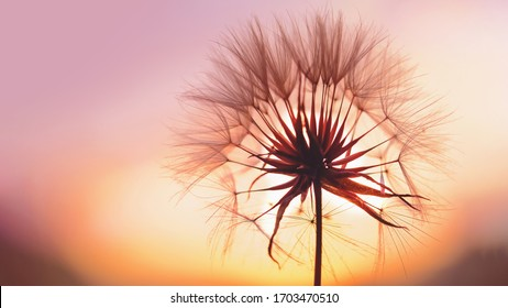 dandelion at sunset . Freedom to Wish. Dandelion silhouette fluffy flower on sunset sky. Seed macro closeup. Soft focus. Goodbye Summer. Hope and dreaming concept. Fragility. Springtime. - Shutterstock ID 1703470510