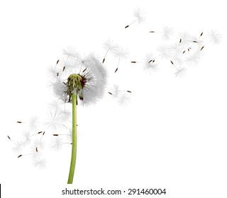 Dandelion, Wind, Pollen.