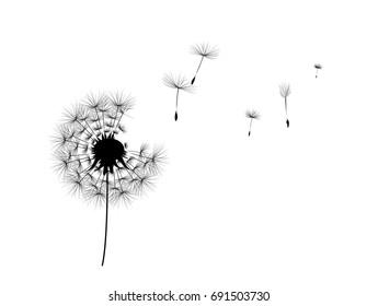Dandelion windy flower