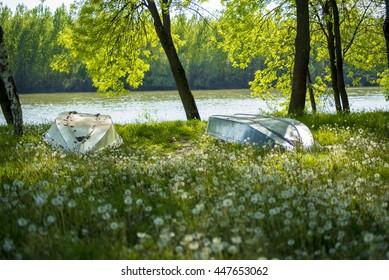 Dandelions, boats, river